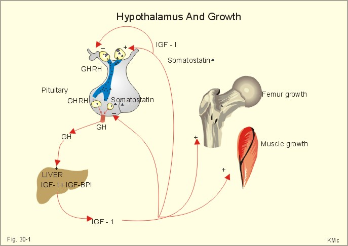 Pictures Of Stages Of Human Growth Development