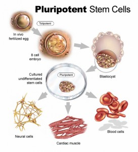 Future Stem Cell Technology